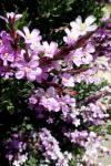 ... fiori